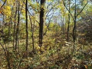 7. Land for Sale at Ridgeview Chandlersville, Ohio 43727 United States