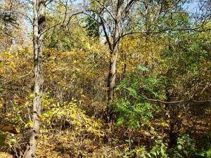 19. Land for Sale at Ridgeview Chandlersville, Ohio 43727 United States