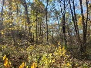 32. Land for Sale at Ridgeview Chandlersville, Ohio 43727 United States