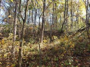 37. Land for Sale at Ridgeview Chandlersville, Ohio 43727 United States