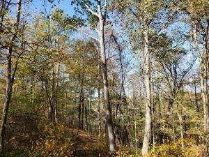 39. Land for Sale at Ridgeview Chandlersville, Ohio 43727 United States