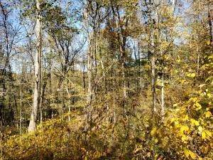 40. Land for Sale at Ridgeview Chandlersville, Ohio 43727 United States