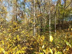 41. Land for Sale at Ridgeview Chandlersville, Ohio 43727 United States