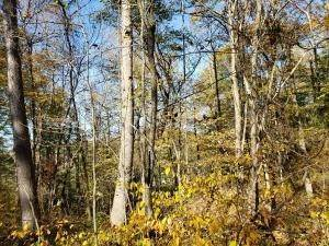 42. Land for Sale at Ridgeview Chandlersville, Ohio 43727 United States