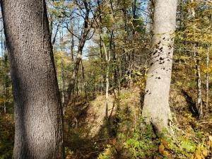 6. Land for Sale at Ridgeview Chandlersville, Ohio 43727 United States