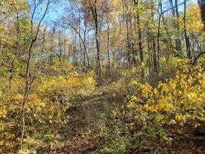 44. Land for Sale at Ridgeview Chandlersville, Ohio 43727 United States