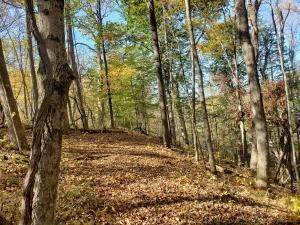 8. Land for Sale at Ridgeview Chandlersville, Ohio 43727 United States