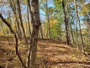 16. Land for Sale at Ridgeview Chandlersville, Ohio 43727 United States