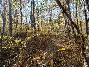 46. Land for Sale at Ridgeview Chandlersville, Ohio 43727 United States