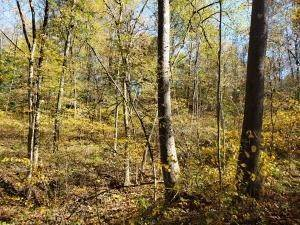 47. Land for Sale at Ridgeview Chandlersville, Ohio 43727 United States