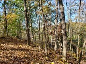 15. Land for Sale at Ridgeview Chandlersville, Ohio 43727 United States