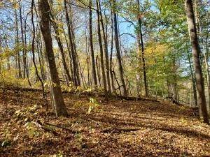 49. Land for Sale at Ridgeview Chandlersville, Ohio 43727 United States