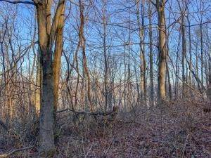 3. Land for Sale at Drake Martin Chandlersville, Ohio 43727 United States