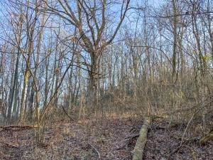 4. Land for Sale at Drake Martin Chandlersville, Ohio 43727 United States