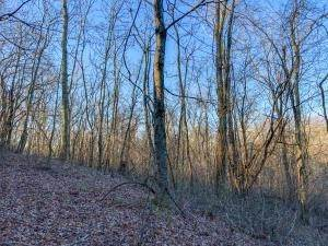 7. Land for Sale at Drake Martin Chandlersville, Ohio 43727 United States